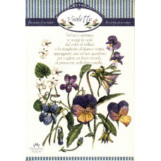 Notes - Violette